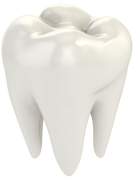 an image of a human tooth