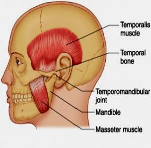 diagram of tmj-related muscles in jaw